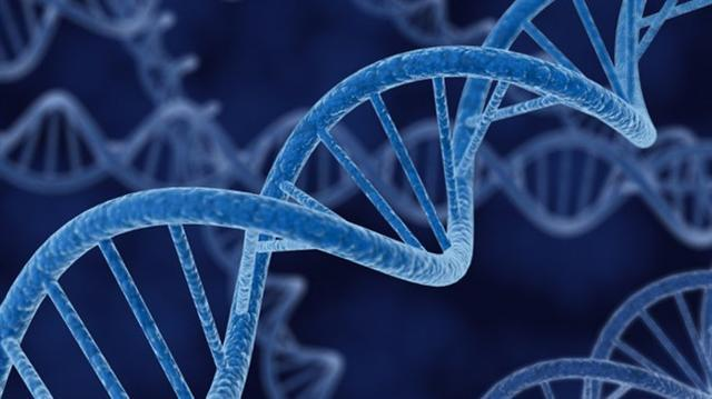 """基因剪刀或可让人""""定制婴儿"""""""