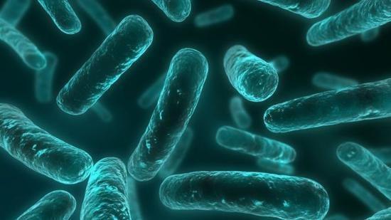 美国发现无敌细菌(组图):抵抗所有抗生素 目前无药可治!