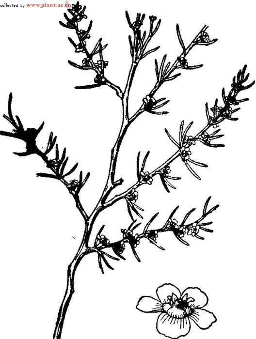如图是木本植物茎的结构