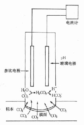 pco2电极结构示意图