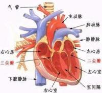 冠心病的定义插图(7)